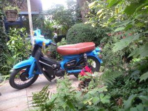 Honda in tuin